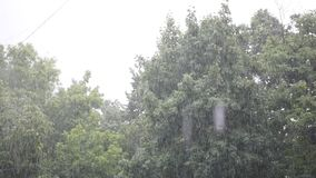 Heavy rain, strong wind shakes the branches of trees, rain water drains.  stock footage