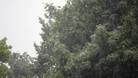 Heavy rain, strong wind shakes the branches of trees, rain water drains.  stock video