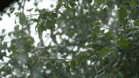 Heavy rain and a tree with leaves. Sunner stock video