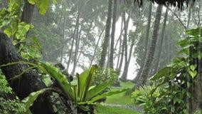 Heavy rain in tropical forest. rainy season stock video