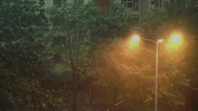 Storm and Heavy Rain 3 - Heavy rain and very strong storm. Trees are moving strongly left and right. Heavy rain and very strong storm. It`s raining heavily and stock footage