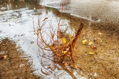 Heavy rain, wind. A branch broken from a tree in a pool of rainwater. Winter Weather in Israel stock images