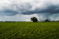 Heavy Rainclouds in the Cambodian Countryside Near Battambang Stock Image