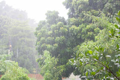 Heavy raining in the tropical forest Royalty Free Stock Image
