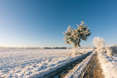 Heavy rutted road with frosted water in winter landscape Royalty Free Stock Photography