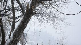 Heavy seasonal weather snowstorm. Shkoder, Albania stock footage