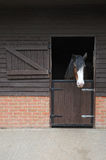 Heavy shire horse looking out over stable door Stock Photo