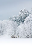 Heavy snow Stock Photo