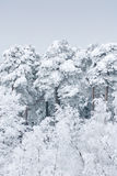 Heavy snow Stock Images