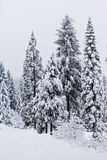Heavy Snow Stock Photography