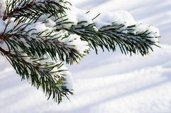 Heavy snow Royalty Free Stock Photography