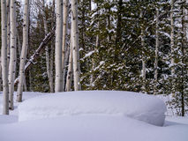 Heavy snow in aspen, pine forest Royalty Free Stock Photo