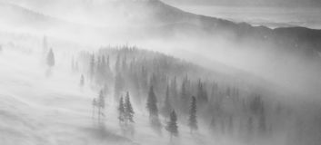 Heavy snow blizzard on mountain slope. Black & white landscape picture of a heavy snow blizzard on mountain slope, over the fir trees Royalty Free Stock Images
