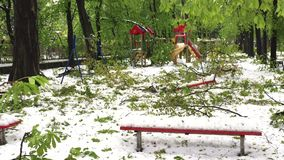 Heavy snow disaster and fallen trees on city streets. And central park in Chisinau, Moldova stock video footage