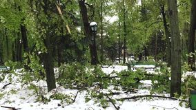 Heavy snow disaster and fallen trees on city streets. And central park in Chisinau, Moldova stock footage