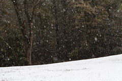 Heavy Snow Fall In A Forest Clearing. A heavy snow shower in December at the edge of a forest clearing in the midlands of South Carolina. Heavy snow fall in Royalty Free Stock Photography