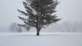 Heavy Snow Fall Surrounding Large Tree stock video