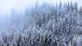 Heavy snow falling stock video footage
