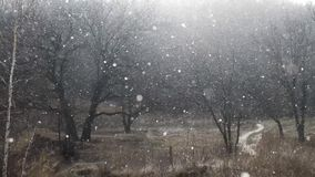 Heavy snow is falling down near to the dark winter forest stock video footage