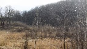 Heavy snow is falling down near to the dark winter forest stock footage