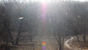 Heavy snow is falling down near to the dark winter forest stock video