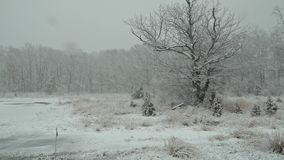 Heavy snow falling in a forest in winter time. Beautiful winter landscape Heavy snow falling in a forest in winter time Winter snow storm blizzard, fir trees stock footage