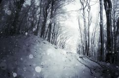 Heavy snow falling in winter forest royalty free stock photo