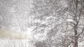 Heavy snow falls in a forest Stock Image