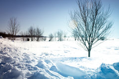Heavy Snow and Fencerow Royalty Free Stock Photos