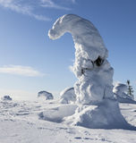 Heavy snow. In Finland within Riisitunturi national park Stock Photography