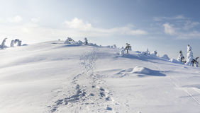 Heavy snow. In Finland at Valtavaara Royalty Free Stock Photos