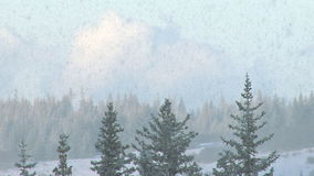 Heavy snow in forest stock video footage
