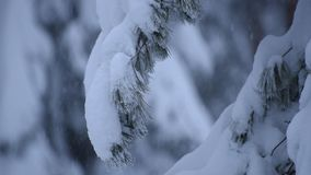 Heavy Snow Pine Branches stock footage