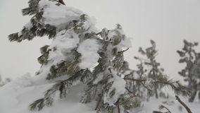 Heavy snow after snowstorm stock video