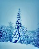 Heavy snow tree. Norwegian winter forest with heavy snow Royalty Free Stock Photo