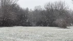 Heavy Snow Landscape Background. A heavy snow and trees background on a cloudy day stock footage