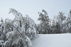 Heavy snow on trees Stock Image