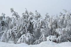 Heavy snow on trees Stock Photos