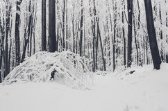 Heavy snow in winter forest Stock Photography