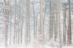 Heavy Snow in Woods Stock Image