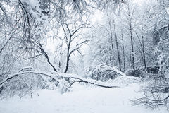 Heavy snowfall Stock Photos
