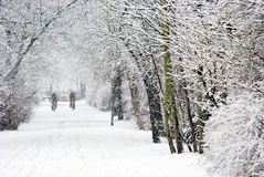 Heavy snowfall. Cyclist on a forest road by heavy snowfall Stock Images