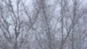 Heavy snowfall with blurry black tree branches in the background stock footage