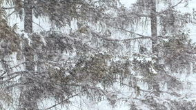 Heavy snowfall in the city. trees sweeps snow. stock footage