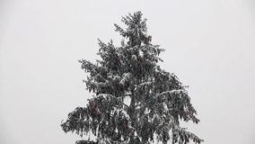 Heavy snowfall with conifers. stock footage