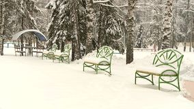 Heavy snowfall in the forest park. Among the trees and pines stock footage