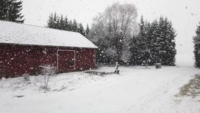 Heavy snowfall. On countryside on winter stock video