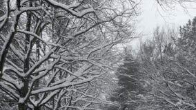 Heavy Snowfall Lake-Effect Snow stock video