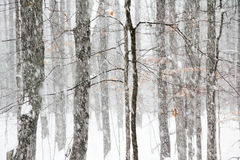 Heavy Snowfall in Michigan Woods Royalty Free Stock Photo