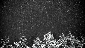 Snowfall at night against the background of trees. stock video